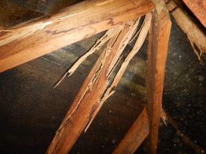 Structural termite damage located inside a roof
