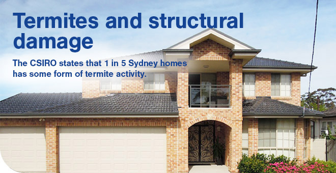 termites-and-structural-damages-sydney-pre-purchase